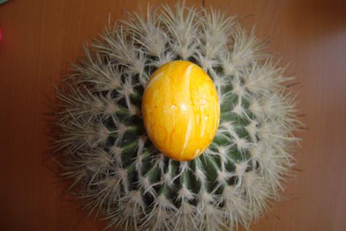 ei-auf-kaktus_rp