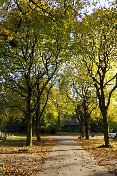 Herbst_Allee