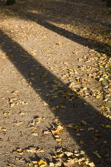 Herbst_Schatten
