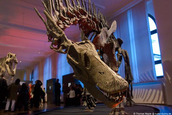 Dinosaurier_Amargasaurus_Cazauii